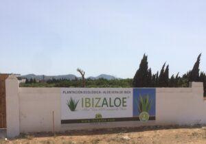 ibizaloe3