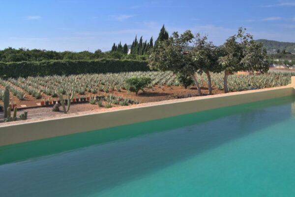 Plantacion Ibizaloe 2