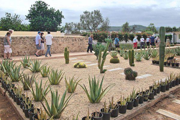 Plantacion Ibizaloe Safareix