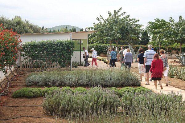 Plantacion Ibizaloe aromáticas